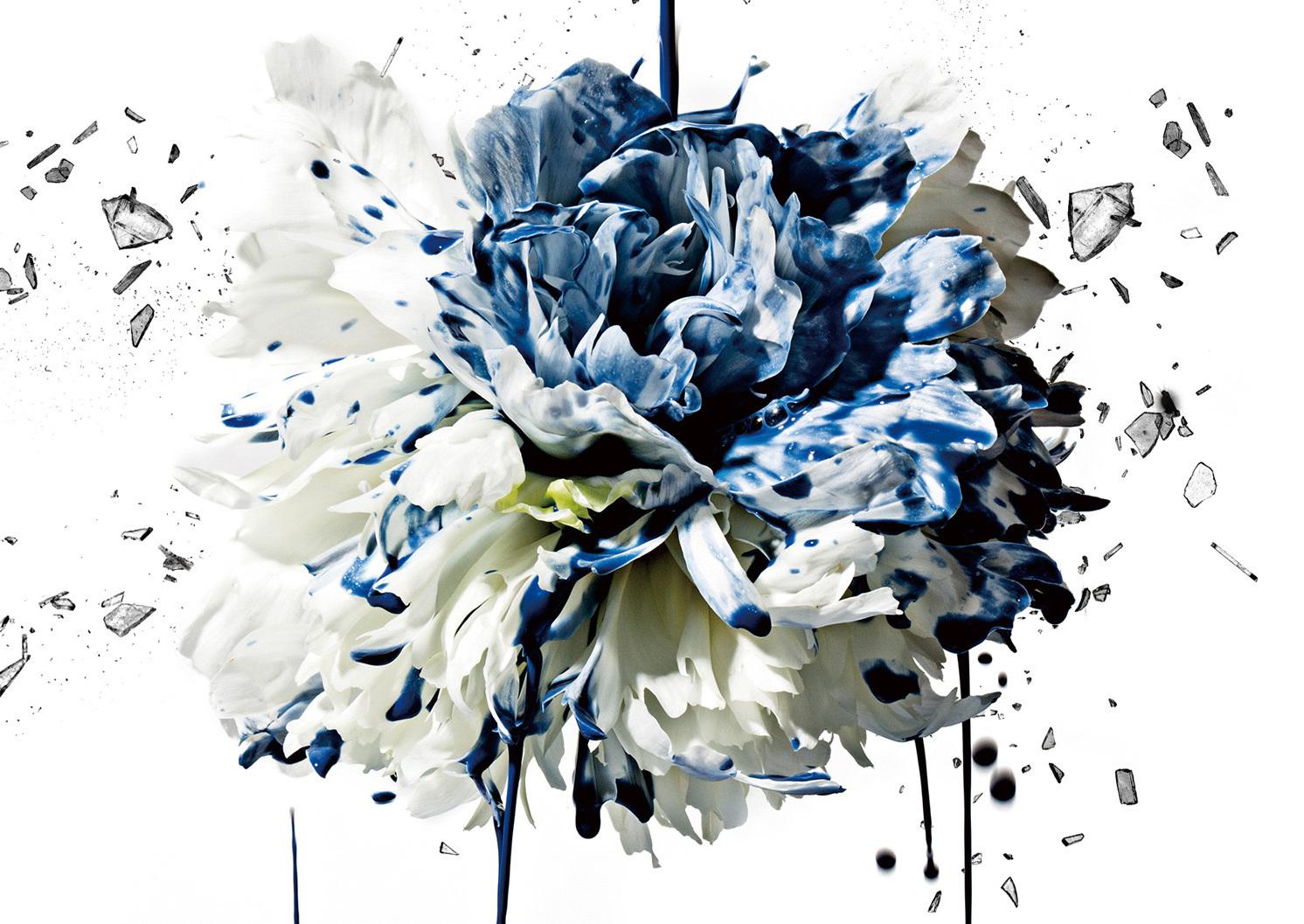 flower_jk_h1_a